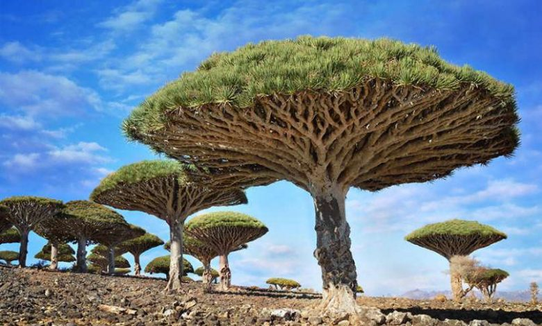 Photo of 9 Most Beautiful Trees On The Planet And Things You Didn't Know About Them