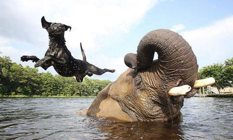 Photo of 15 Bizarre Animal Friendships Absolutely Adorable
