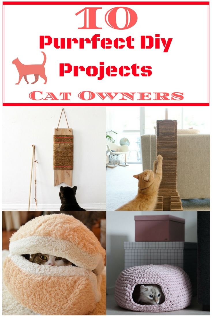 10-purrfect-diy-projects-cat-owners
