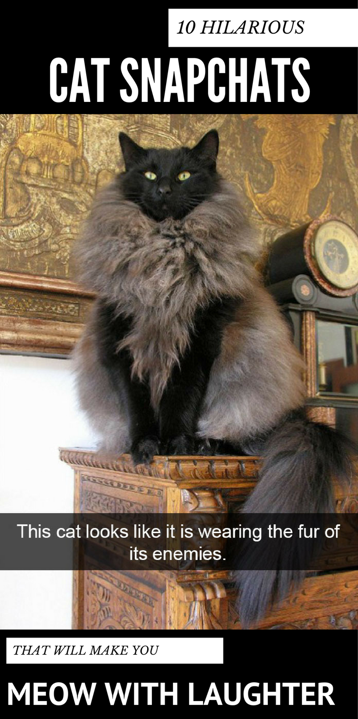 10 Hilarious Cat Snapchats That Will Make You Meow With Laughter