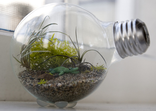 Photo of 15 Terrariums With Succulents