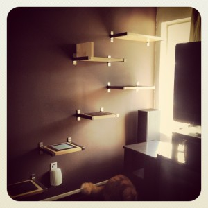 cat-shelves-2-300x300