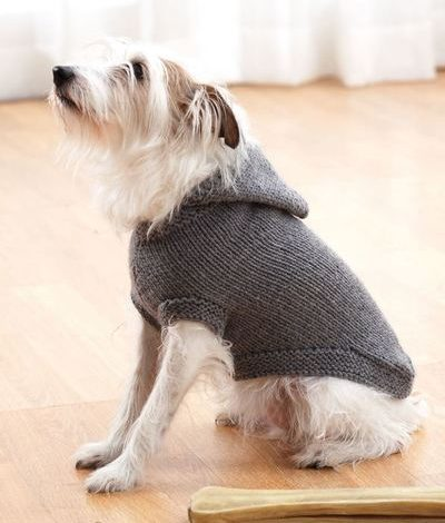 Photo of 10 Knitting Patterns For Cats and Dogs