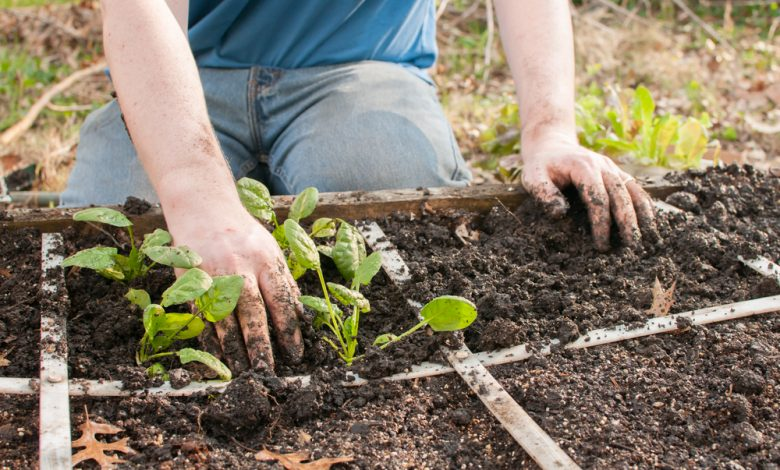 Photo of 10 Unique Gardening Tips For Easy Gardening