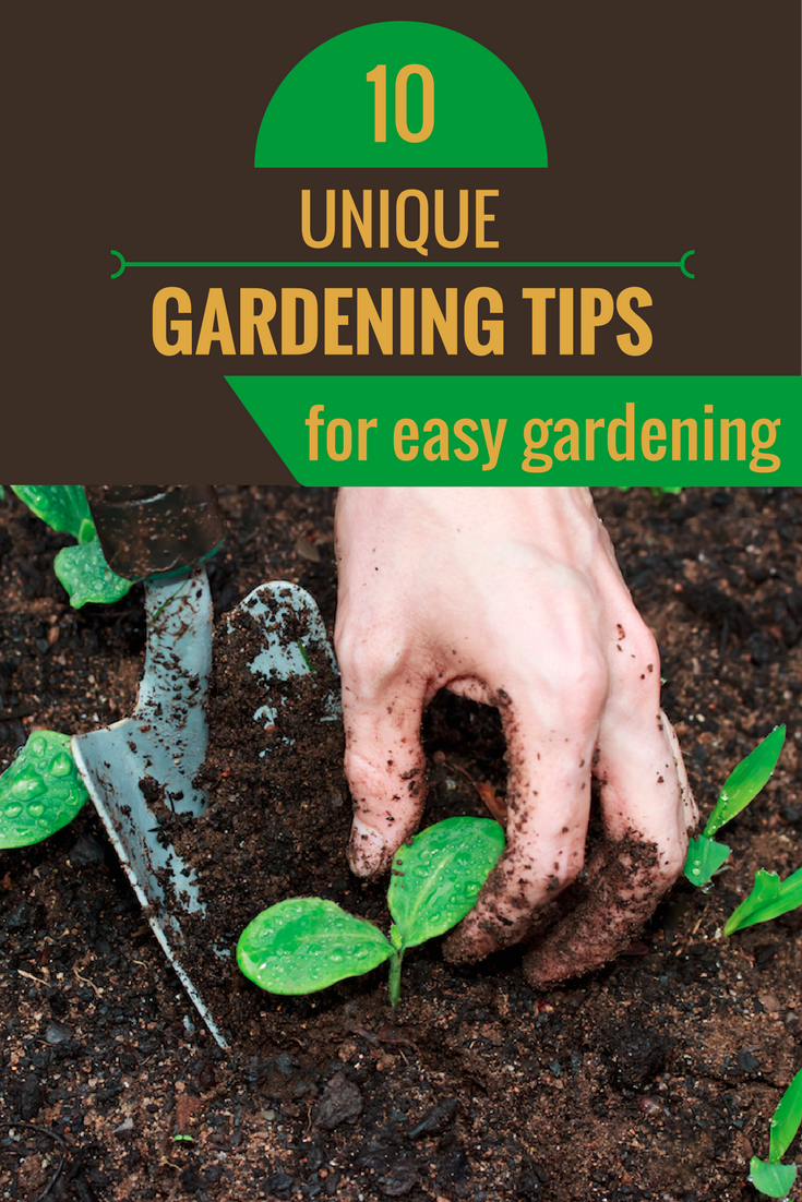 10 unique gardening tips for easy gardening for Gardening advice