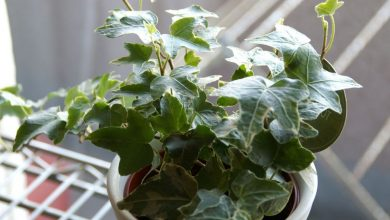 Photo of 10 Air Filtering Plants That Will Absorb Excess Humidity in Your House