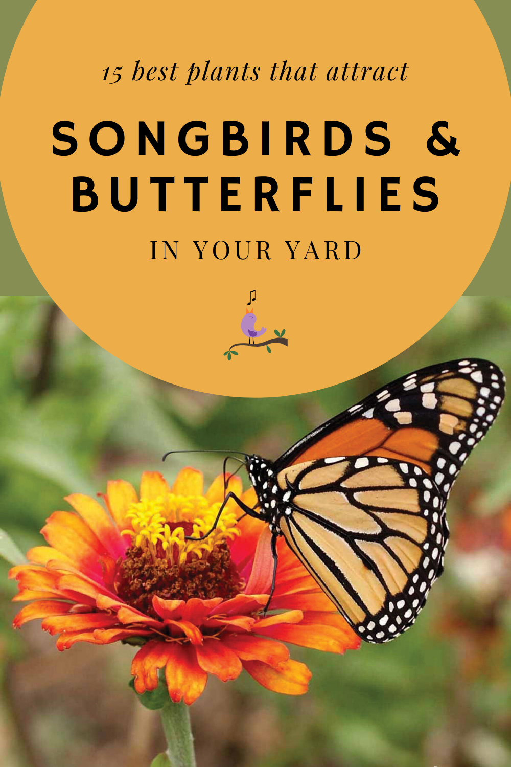 15 Best Plants That Attract Songbirds And Butterflies In ...