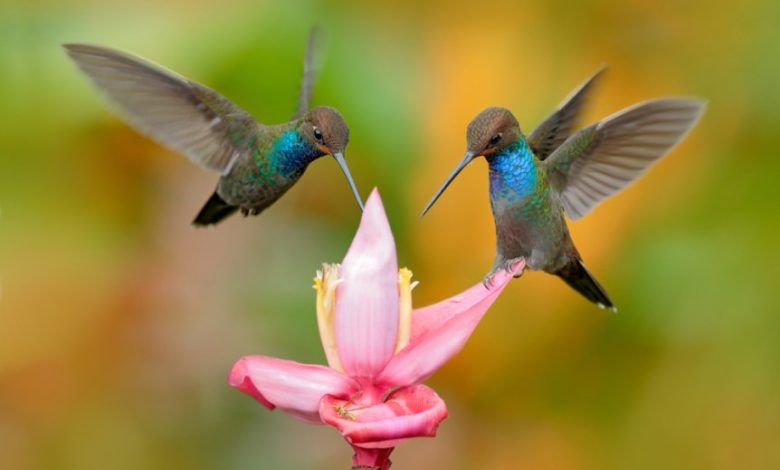 Photo of 25 Plants That Attract Hummingbirds