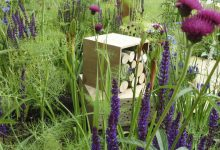 Photo of How To Attract Honey Bees And Pollinators In Your Garden