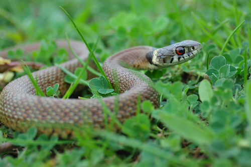 Photo of 10 Best Plants That Repel Snakes